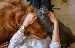 Covid-19: los perros y gatos pueden tener el virus pero no transmiten la enfermedad