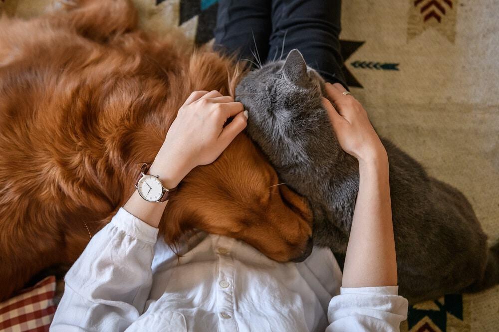 Gatos mais carinhosos: estudo relaciona saúde mental na pandemia com aproximação a pets. Imagem: Chedongshan/iStock