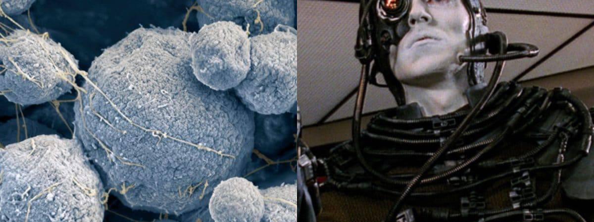 """Cientistas ficam chocados com descoberta de DNA semelhante ao dos """"Borgs"""" de Star Trek"""