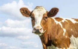 Bactérias presentes no estômago de bovinos podem degradar plástico, diz estudo