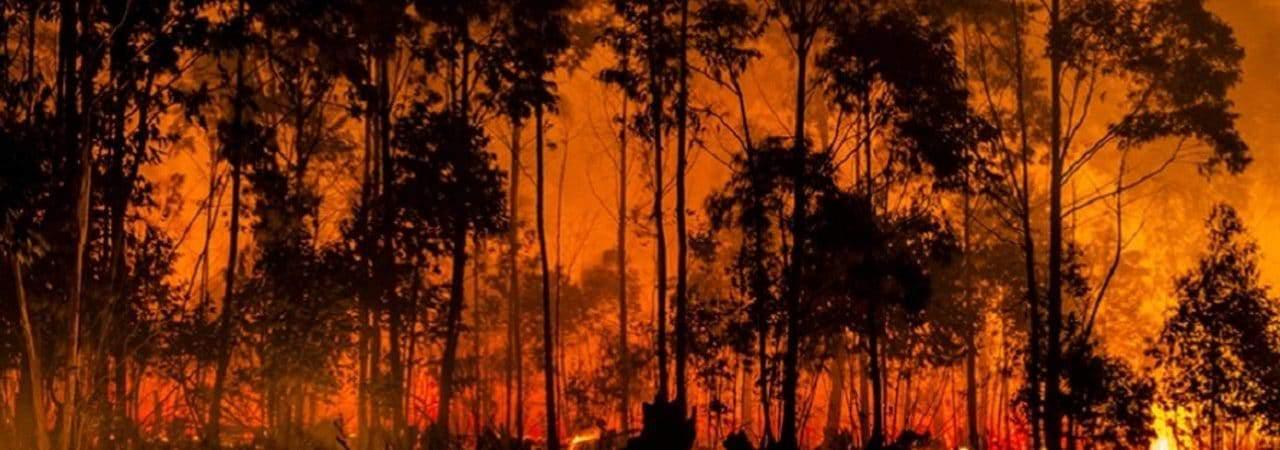 Imagem mostra um incêndio florestal, com as árvores exibidas em silhueta à frente das chamas