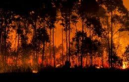 """""""Pirocumulonimbus"""", ou """"nuvens cuspidoras de fogo"""", destróem pequena vila no Canadá"""