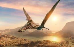 Pterossauros provavelmente nasciam sabendo voar, dizem cientistas