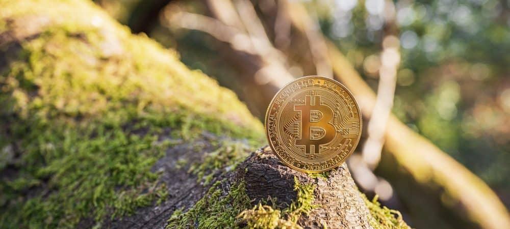 Imagem mostra uma unidade de bitcoin em uma árvore ao ar livre, ilustrando o impacto ambiental da mineração