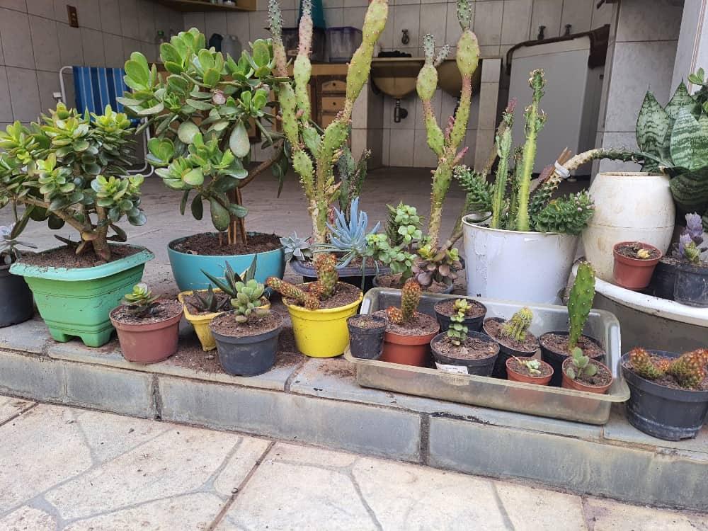 Foto tirada de um Galaxy M62, mostrando um conjunto de plantas