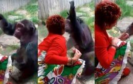 """Amor proibido: mulher é banida de zoológico na Bélgica por """"caso"""" com chimpanzé"""