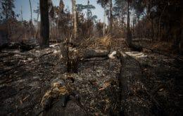 La deforestación podría traer otras pandemias, como la de Covid-19, dice la ONU