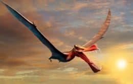 """Pesquisadores descobrem fóssil de """"dragão"""" na Austrália"""