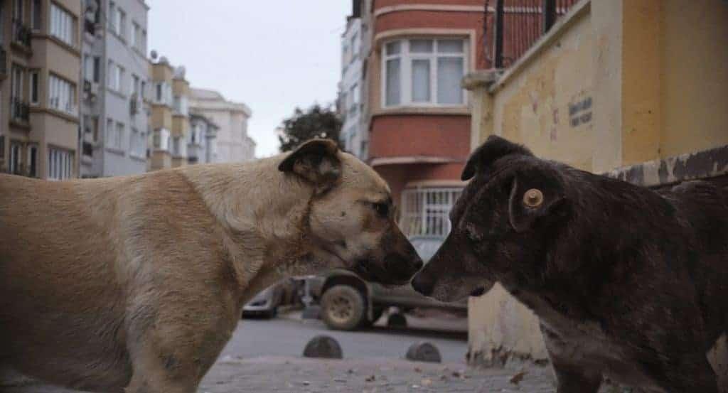 Crítica: 'Vida de Cão' mostra a beleza dos vira-latas e a dureza das ruas