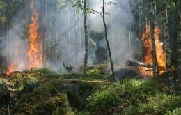 Como incêndios florestais e a fuligem podem prejudicar nossa saúde?