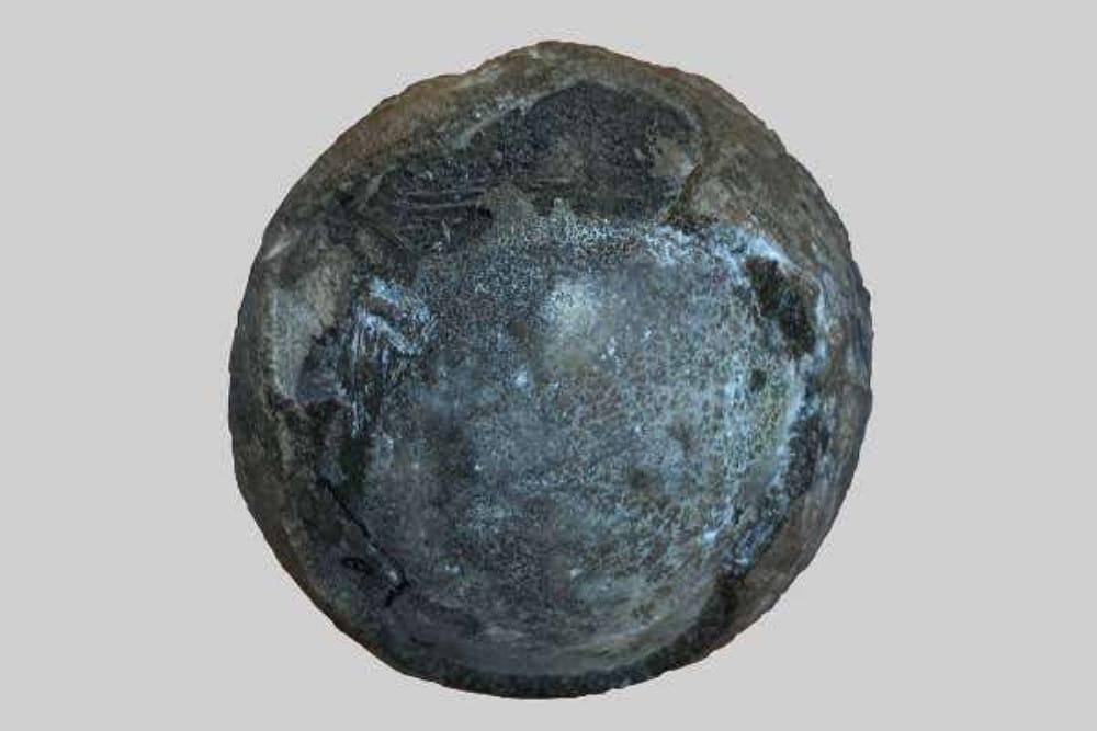 Foto mostra ovo de tartaruga pré-histórica, encontrado na China e analisado por especialistas em paleontologia