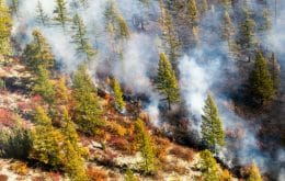 Siberian forest fire makes smoke hit North Pole for the first time