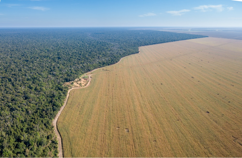 Imagem aérea mostra área desmatada do Xingu, no Brasil. Especialistas dizem que a prática pode levar a Amazônia a uma transformação ecológica irreversível de grande escala