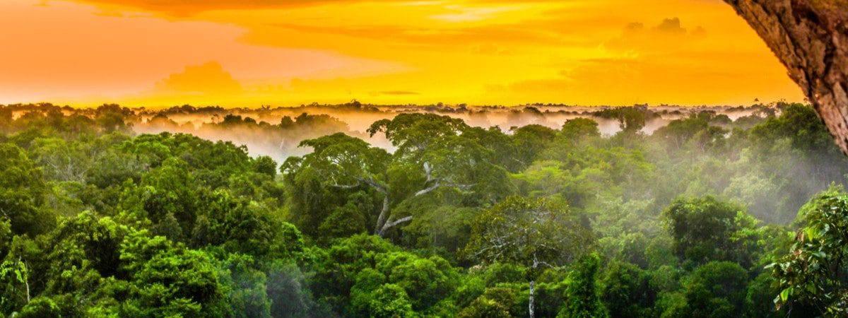Imagem mostra uma região da floresta amazônica, iluminada pelo pôr do sol, com as árvores e neblina na parte de baixo
