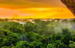 """Desmatamentos levarão Amazônia a """"transformação ecológica em larga escala"""""""