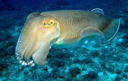 Existe um molusco que lembra o que, quando e onde comeu — até na velhice