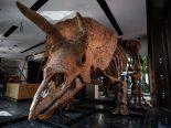 """""""Mimo""""milionário: o maior esqueleto de um Tricerátops do mundo é vendido por R$ 43 milhões"""