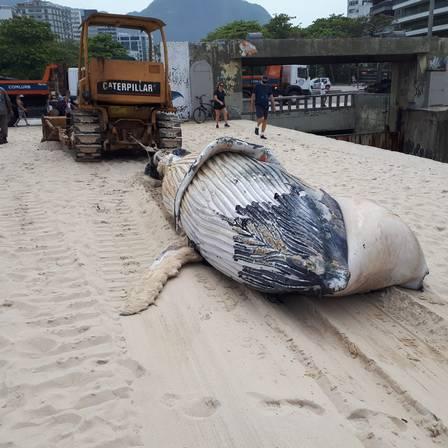 Baleia sendo retirada de praia no Rio de Janeiro