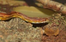 Cientistas usam cobras com GPS para medir radiação de Fukushima