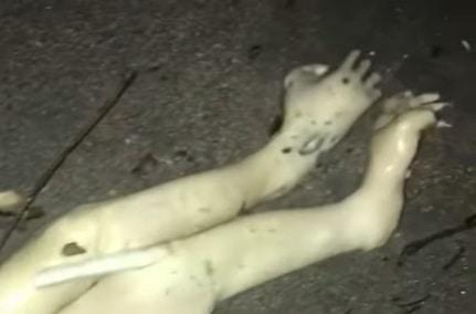 Criatura misteriosa é supostamente encontrada por surfista no Panamá