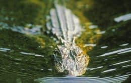 Artefatos de mais de 4.000 anos são encontrados no estômago de crocodilo