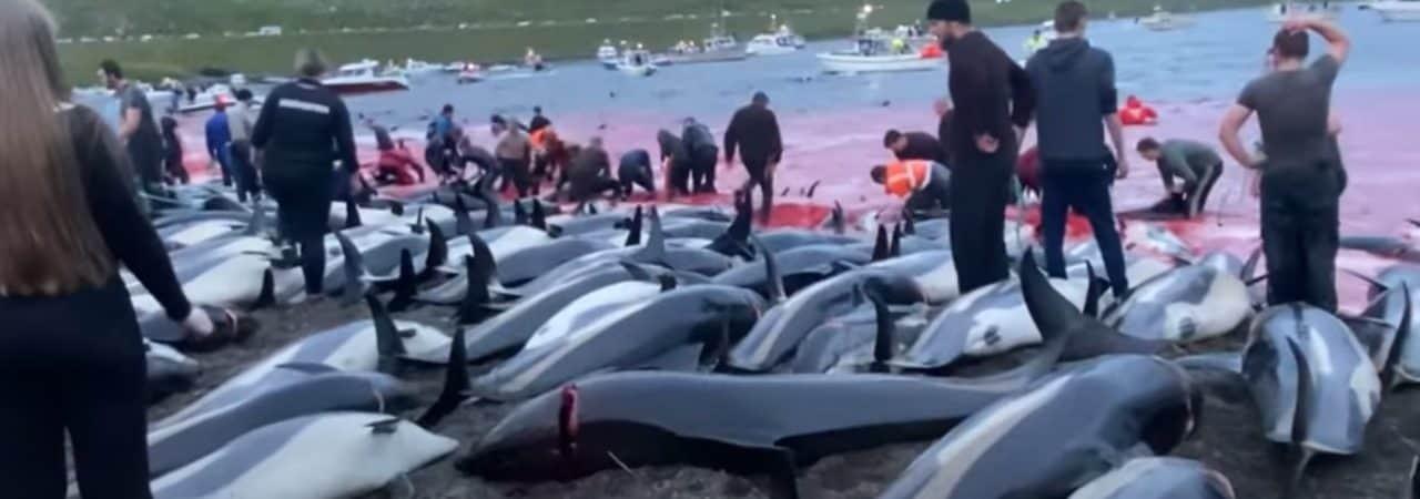 Caça às baleias das Ilhas Faroé