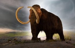 Empresa levanta quase R$ 80 milhões para 'ressuscitar mamutes'