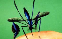 Conheça Sabethes: o mosquito mais bonito do mundo (e que é um perigo)