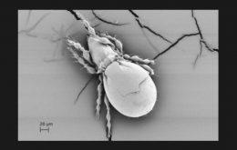 Cientistas estudam animal de reprodução assexuada com sobrevivência mais longa que o normal