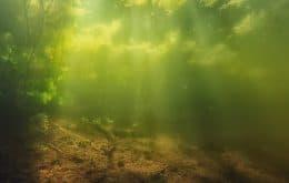 Herbicida coloca ecossistemas de água doce em risco