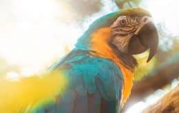 Aquecimento global está causando alterações físicas nos corpos dos animais