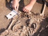 Fósseis recém-descobertos podem ser de ancestrais japoneses desconhecidos