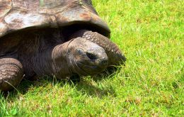 189 anos! Conheça Jonathan, o animal terrestre mais velho do mundo