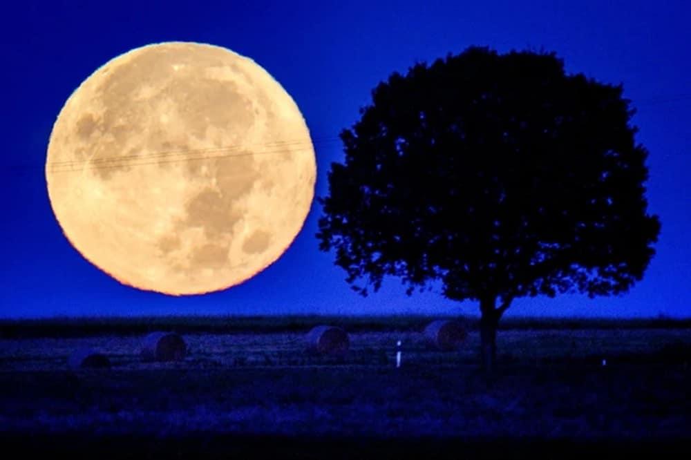 Imagem da Lua da Colheita por trás de uma árvore