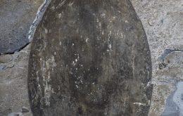Cientistas descobrem fóssil de animal gigante do período cambriano