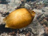 Mergulhador encontra ovo de tubarão em Fernando de Noronha; veja vídeo