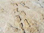 Pegadas fossilizadas dão novas pistas sobre origem dos povos americanos