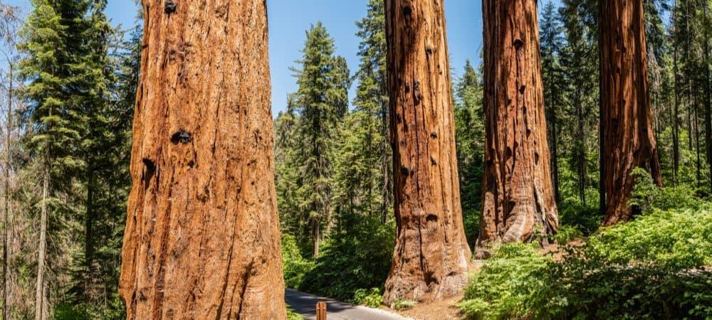 quatro-guardas-sequoias-1000x450