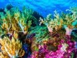 Cientistas criam primeiro mapa global em alta resolução dos recifes de corais tropicais