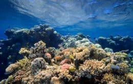 Tudo pela vida marinha: mapa mostra recifes de coral em todo o planeta