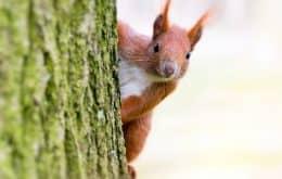 Estudo revela que esquilos têm personalidades que definem suas ações no meio ambiente