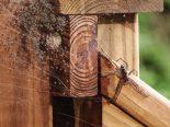 """Como os insetos conseguem """"prever"""" mudanças no clima?"""