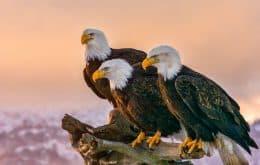 Los cierres de Covid-19 han ampliado los hábitats de las aves, según un estudio