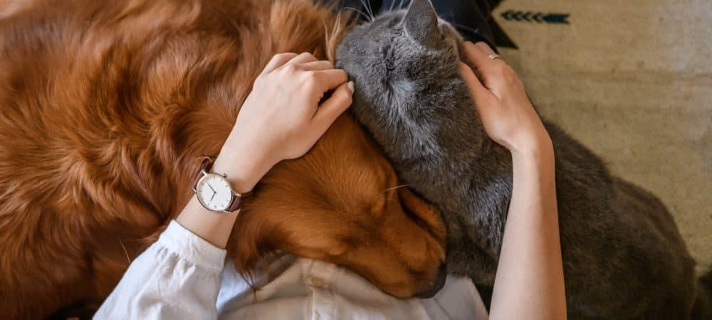 Tutor abraçando os seus pets