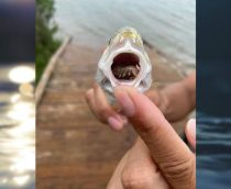 Tongue-eating creature found on island in USA