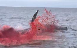 Tripas e sangue: vídeo mostra momento em que baleia morta explode