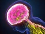 Alzheimer: pesquisa identifica ritmos cerebrais que interferem na orientação espacial e na memória ambiental