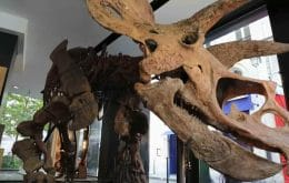Largest triceratops fossil ever found is auctioned for US$7,7 million